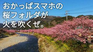 おかっぱミユキ桜