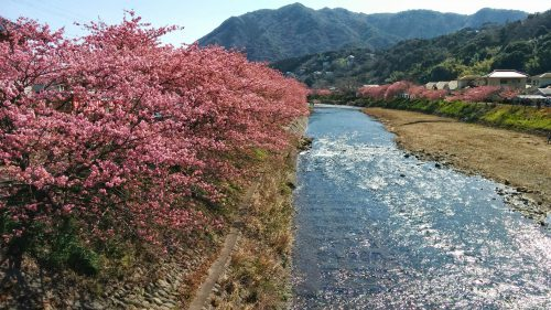 おかっぱミユキ桜5