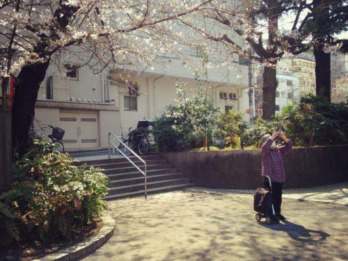 おかっぱミユキ桜10
