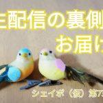 【生配信の裏側】小鳥が復帰しましたよー!
