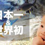 【日本一&世界初】展示アイデアが秀逸!北の大地の水族館!