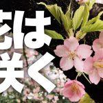 【今夜】21:00からFacebook生配信!