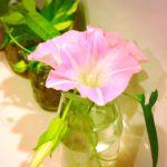 このお花なんて名前?